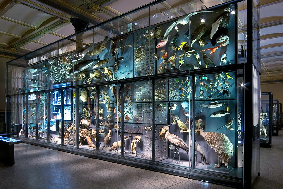 Museum für Naturkunde Berlin, Biodiversitätswand