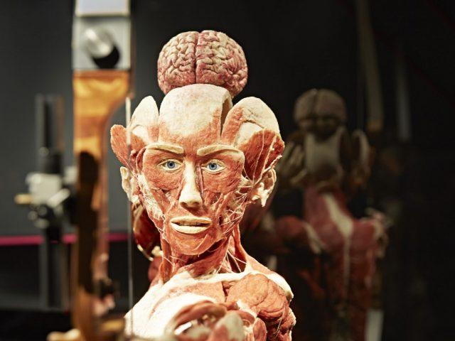 Menschen Museum